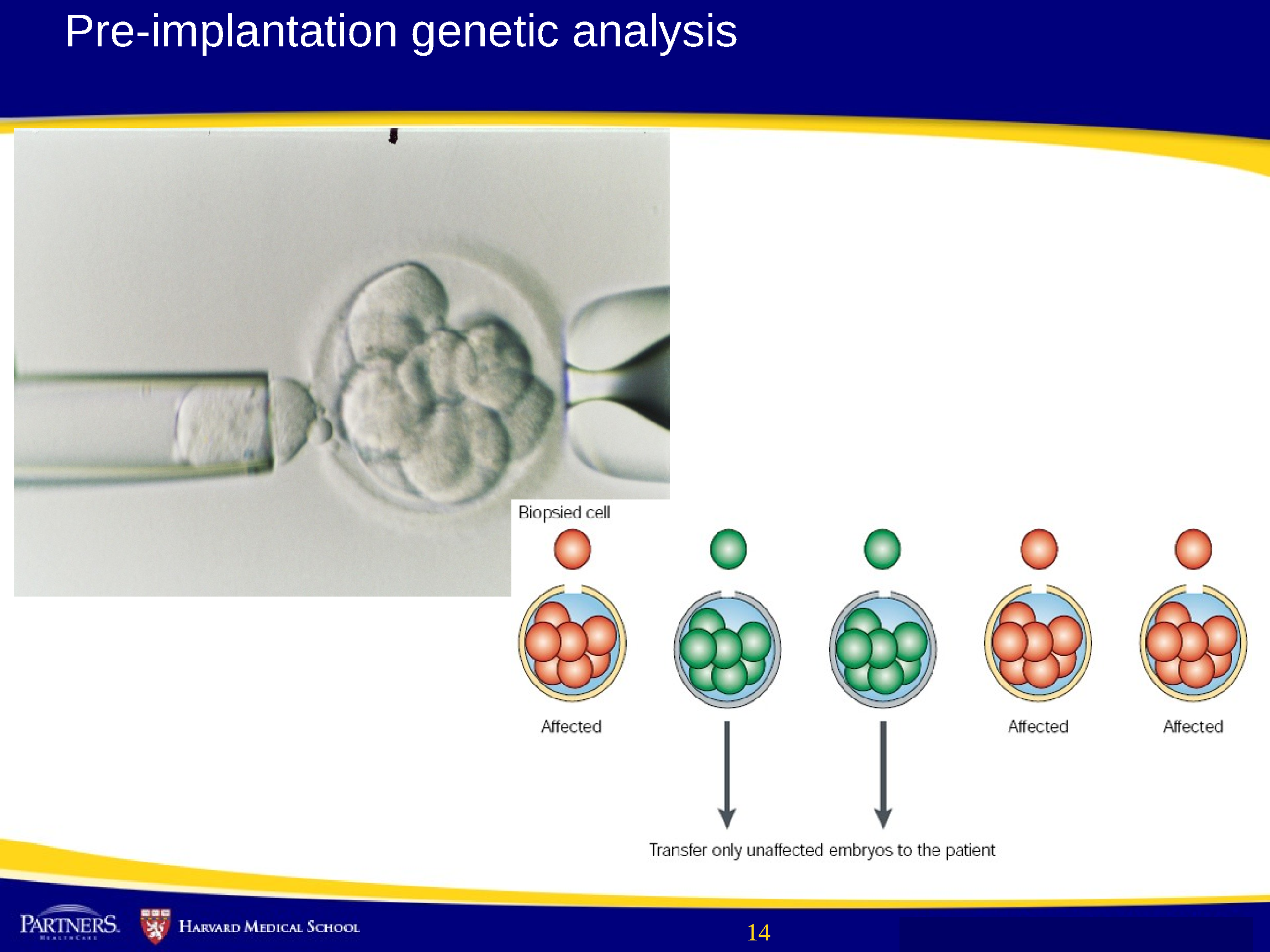 genetics and genomics The development of the technology to sequence the dna of whole genomes on a routine basis has given rise to the discipline of genomics, which.